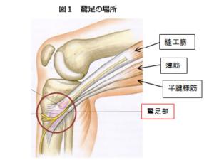 神戸市須磨区はくの接骨院 膝の内側の痛み